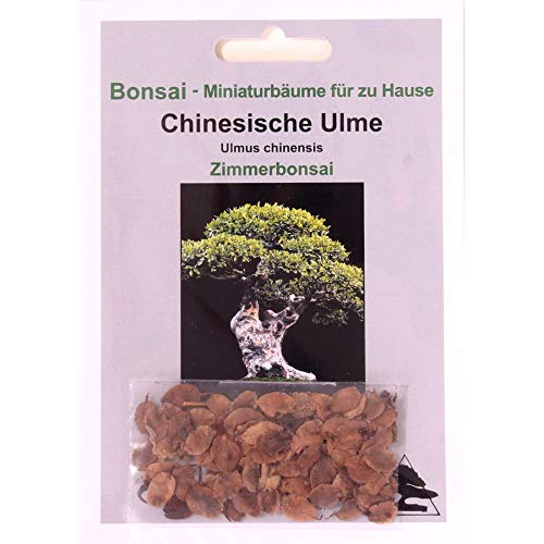Tropica - Orme Chinois (Ulmus chinensis) - 30 Graines