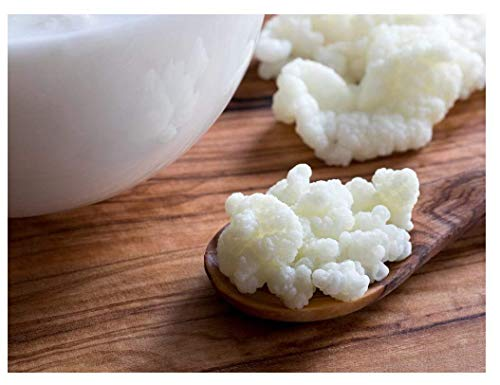 Milk Kefir Grains Live Fresh Starter to Make Drinkable Yogurt from Mesophilic Symbiotic Culture