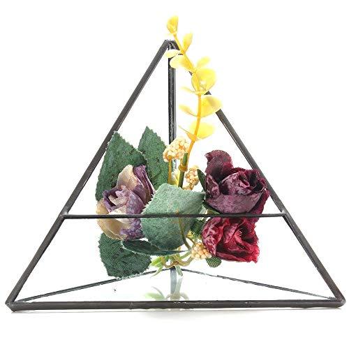 HO-TBO Plante terrarium en forme de triangle 15 cm pour serre de jardin, transparent, taille unique