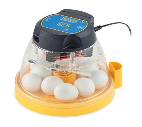 FINCA CASAREJO Incubadora Brinsea Mini II Eco pequeña para incubar 10 Huevos de gallina o 24 de codorniz. También Funciona como nacedora magnífico Rendimiento