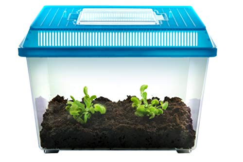 2 Venus Fly Trap Plants in 9'x 6'x 6.5' Terrarium by Nature Gift...