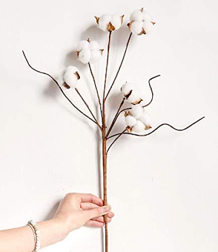 pah-macy Ramo de Flores Secas Naturales Ramas Algodon Artificial Flor de Algodon Seca Blanco Flores Hogar Bodas Fiestas Cocina Escritorio Restaurante-Rama de algodón Yuli 3_Paquete de Flores secas