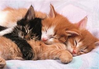 Educa Kittens Puzzle (500 Piece)