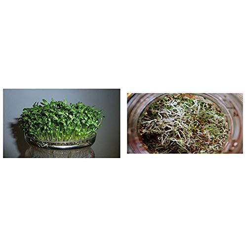 Premier Seeds Direct Organic CRESS Curled/Common - 40GM - Approx 16,000 Seeds & Seeds Direct Organic Sprouting Seeds - Alfalfa - 40 GM