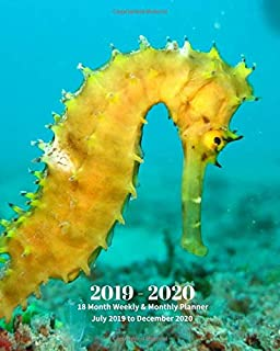 2019 - 2020 | 18 Month Weekly & Monthly Planner July 2019 to December 2020: Yellow Seahorse Marine Life Vol 38  Monthly Calendar with U.S./UK/ ... Holidays– Calendar in Review/Notes 8 x 10 in.