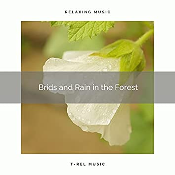 ! ! ! ! Birds and Rain in the Forest