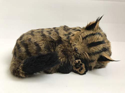 Perfect Petzzz Gato Maine Coon de Peluche, Que Respira
