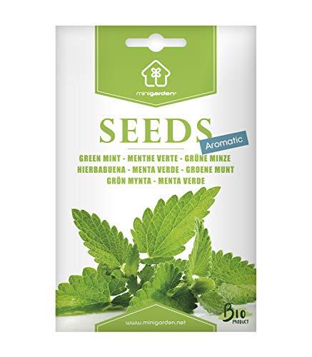 Grüne Minze, Samen von Minigarden, enthält zwischen 1000 und 1600 Samen