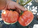Pomodoro '' Belmonte pera '' ~ 25 semi di alta qualità - Dolce Rosso - Rare - Arrampicata