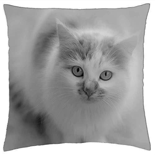 BXBX Funda de Almohada (18 x 18 Pulgadas) - Gato Blanco y Negro Mascota felino