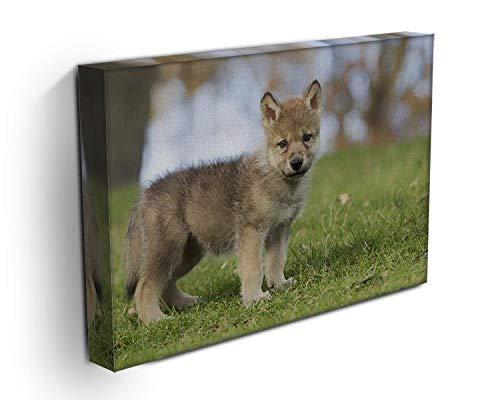 Immagine del profilo di un giovane cucciolo di lupo grigio Stampa su tela - Moderno Giclee stampe su tela, Tessuto, 36in x 26in | 90cm x 65cm