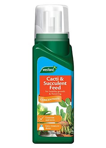 Westland-Engrais concentré pour Plantes, 200ML Engrais pour Cactus et Plantes Grasses Transparent