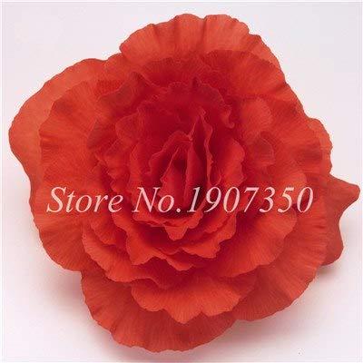 Shopmeeko Graines: 100 Pcs/Mitigé Begonia fleur en pot de bonsaïs d'intérieur Decoratie beau jardin mur usine Décoration pour l'arbre de Noël: 3