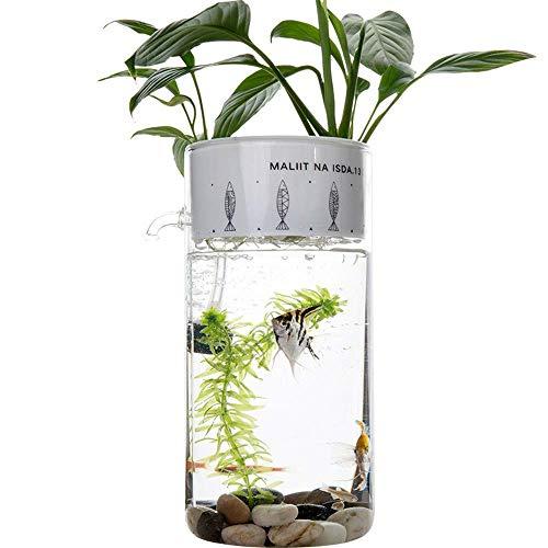 DBSCD Aquarium wachsen Pflanzen,Gemüse Wasser Garten,Aquarien Pflanze Blase Aquarium kreative selbstreinigende ökologische Büro Desktop Mini Glas faul