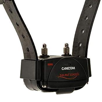 Num'axes Collier Dressage Canicom 200 First pour Chien