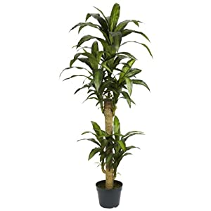 Nearly Natural 6100 Yucca Silk Plant, 5Ft-Green