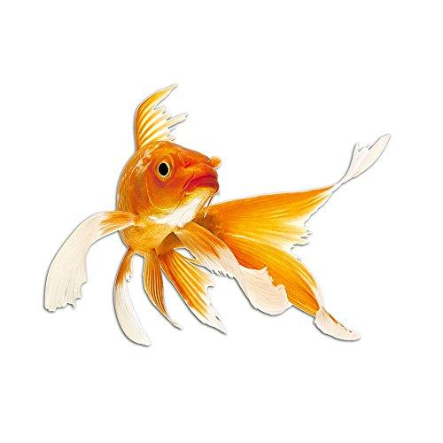 GRAZDesign Wandsticker Toilettentattoos Goldfisch, Wasserfeste Fliesen Aufkleber Fisch, Wandtattoo Bad Badezimmer WC Kinderzimmer / 40x30cm