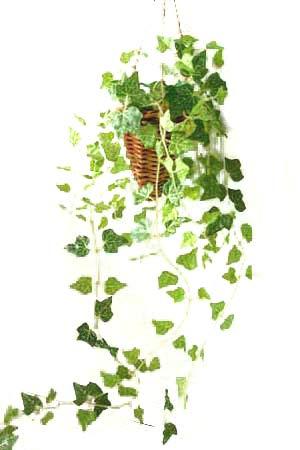 フェイクグリーン アイビー 光触媒加工 吊り下げ式 人工観葉植物
