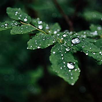 #1 Loopable Rain Sounds for Sleep and Tranquility
