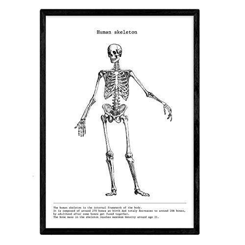 Nacnic Posters de anatomía en Blanco y Negro con imágenes del Cuerpo Humano. Láminas sobre biología y Medicina con Detalle de Esqueleto. Tamaño A4. Sin Marco.