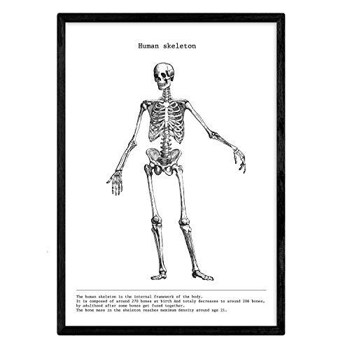 Nacnic Anatomie Poster. Vintage Stil Wanddekoration Abbildung von Skelett, Muskeln und Knochen. Verschiedene menschliche Körper, Biologie und Medizin Bilder ohne Rahmen. Größe A3.