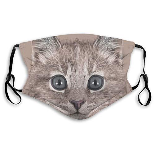MundschutzAtmungsaktiveGesichtsmundabdeckungStaubdichter,Portrait of Domestic Cat Cute Baby Kitten Pet Whiskers Fluffy Feline,Gesichtsdekorationen,S