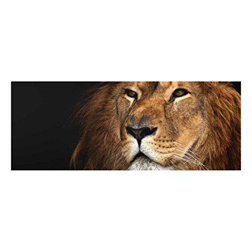 Bilderwelten Top Tiere Glasbilder Wandbild Foto Kunstdruck 50 x 125 cm, Löwenblick