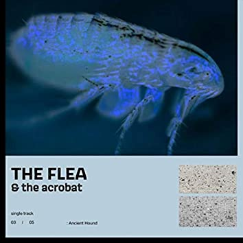 The Flea and the Acrobat
