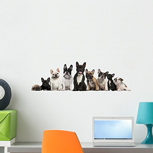 Wallmonkeys WM348745 Group of French Bulldogs in Front of White Background Peel and Stick Wall Decals (24 in W x 8 in H), Medium