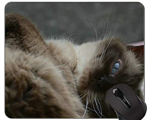 Yanteng Alfombrillas de ratón, Alfombrilla de ratón Impresa British Shorthair Cat Grass con Borde de Bloqueo, Alfombrilla de ratón Cat con Borde Cosido