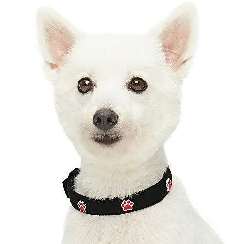 Umi. Essential Niedliche Pfoten Designer Hundehalsband in Schwarz mit Metallschnalle, Hals 33cm-42cm, für mittelgroße Rassen