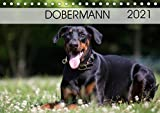 Dobermann 2021 (Tischkalender 2021 DIN A5 quer)