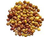 Trebol blanco enano grasslands Huia sin tratar – 3 gramos – Trifolium Repens L – White Clover – (Fertilizante verde – Green Manure) – SEM06