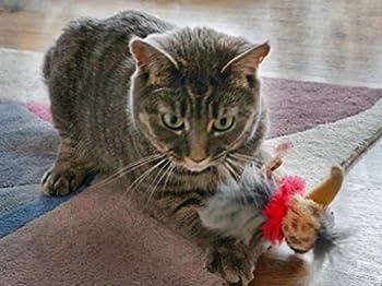 2 x jouets pour chats avec CATNIP de Mishi - Paquet de 2 Dippy Dodos - Oiseaux avec queues de plumes - Jouets à mâcher pour chatons et chats adultes - Pour les chats d'intérieur et d'extérieur