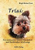 TRIXI: Ein amüsantes Yorkie-Hündchen mit heilender Wirkung