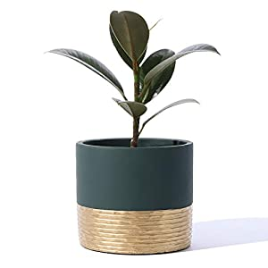 POTEY 055902 Cement Planter Pot – 5 Inch Indoor Concrete Planters Bonsai Container with Drainage Hole for Small Plants Succulent Cactus Flowers (BC Rail Dark Green+Golden, Plant NOT Included)