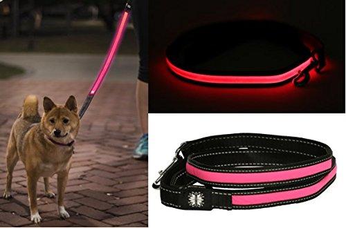 Little Light Lab Light Up LED Lighted Dog Leash