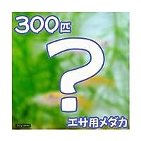 (めだか)生餌 エサ用メダカ/えさ用めだか(300匹)
