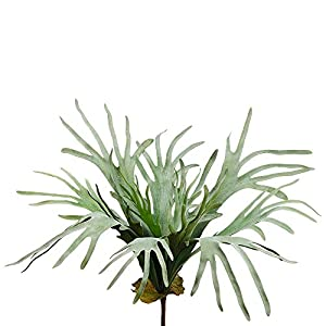 "Silk Flower Arrangements SilksAreForever 31"" Artificial Staghorn Fern Plant -Frosted Green (Pack of 6)"