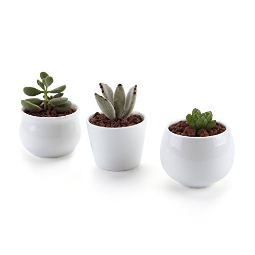 T4U 6,5/7 cm Ronde Modern Wit Collection No.31 keramische vetplantenpotten cactus plant potten mini bloempotten set van 3