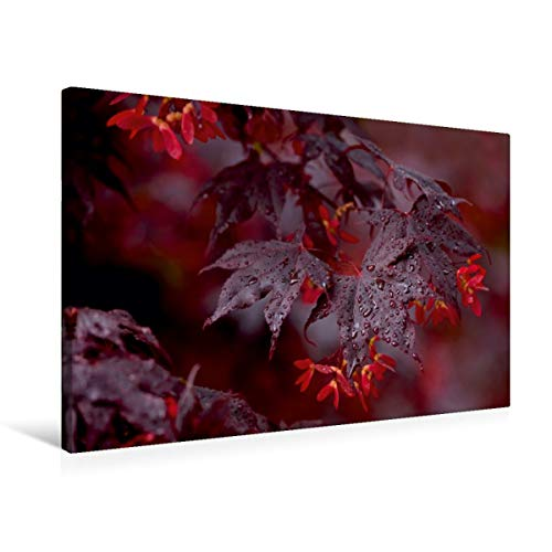 Calvendo Premium Textil-Leinwand 75 cm x 50 cm quer, Japanischer Roter Fächerahorn | Wandbild, Bild auf Keilrahmen, Fertigbild auf echter Leinwand, Leinwanddruck: Farbakzente in der Natur Natur Natur