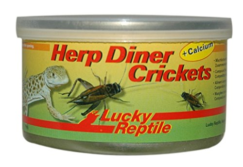 Lucky Reptile Herp Diner Crickets groß 35 g, 1er Pack (1 x 35 g)