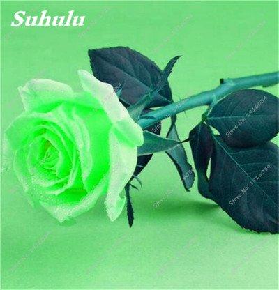 100 pièces / sac Couleur Rare Rose Graines Outdoor Bonsai Graines de fleurs vivaces Fleurs Graines Plante en pot pour jardin Décor 22