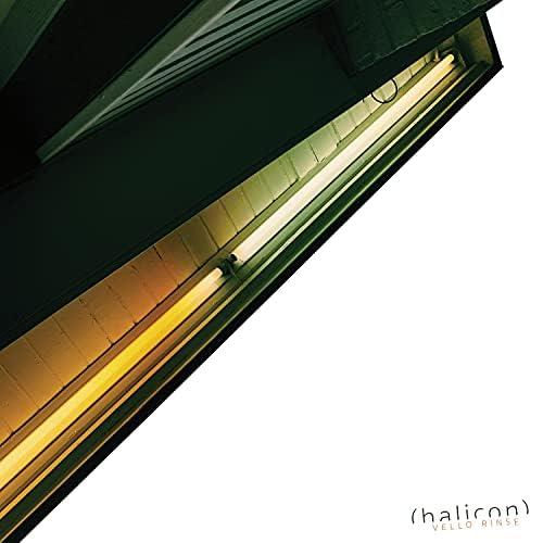 Halicon