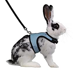 Can You Take a Pet Rabbit Outside for a Walk? 1