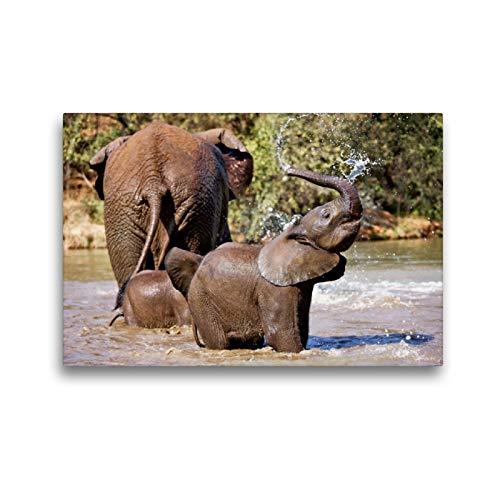Premium Textil lienzo 45 cm x 30 cm horizontal, Nasser Diversión – alegre elefante al refrescante plantar en el agua – Imagen en elefantes, Sudáfrica (CALVENDO);CALVENDO Animales