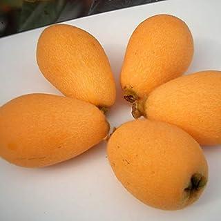 南国フルーツ 九州産びわ2パック(10-12粒)