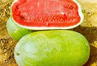 HeirloomSupplySuccess 25 Heirloom Charleston Gray 133 Watermelon Seeds
