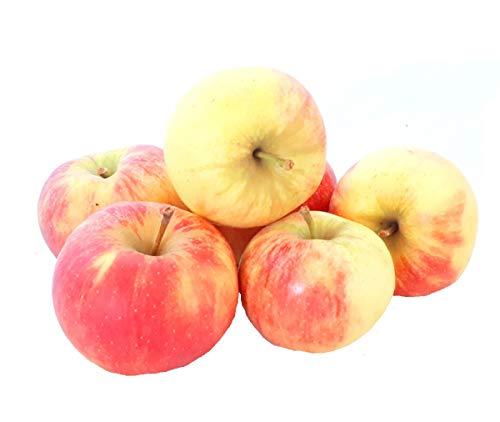 Äpfel Elstar vom Bodensee fein-säuerlicher Apfel 1-10 KG (5)
