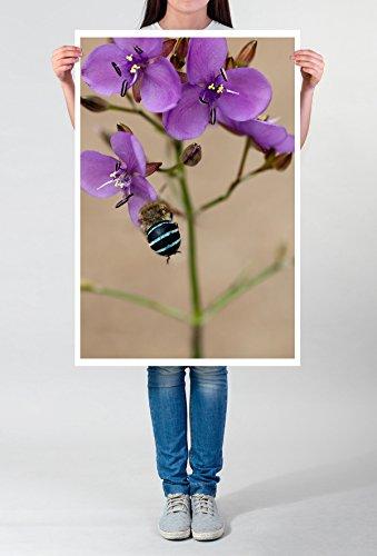 Best for home Artprints - Kunstbild – Australische Wildblume Murdannia graminea- Fotodruck in gestochen scharfer Qualität